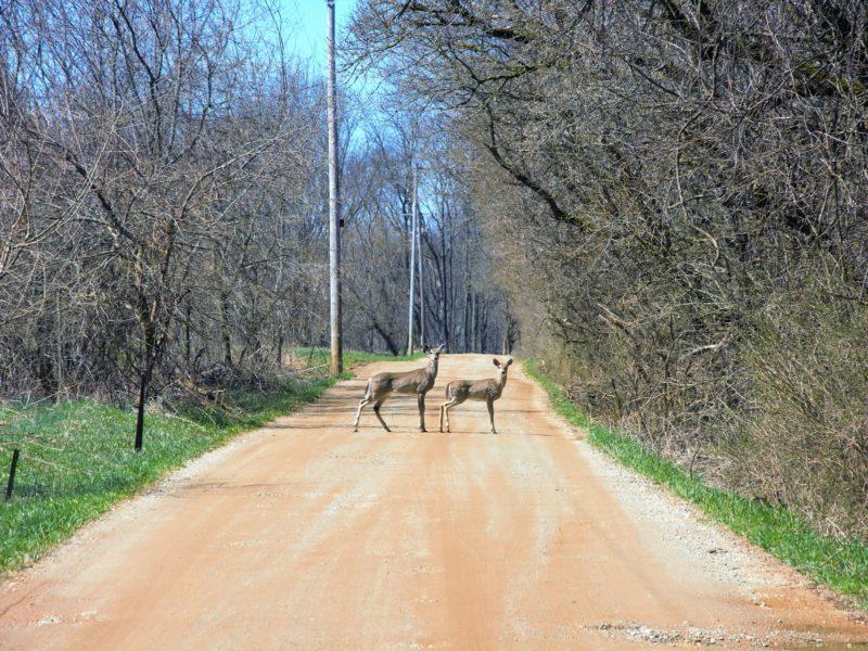 Auto Insurance & Wildlife